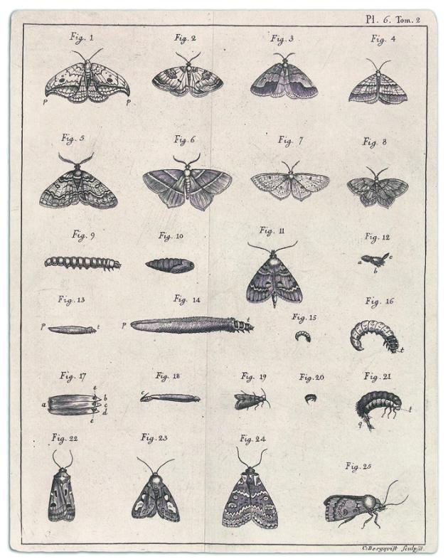 Gravierte Illustrationen aus Charles De Geers Mémoires, Band 2, 1771. Universitätsbibliotek Uppsala.